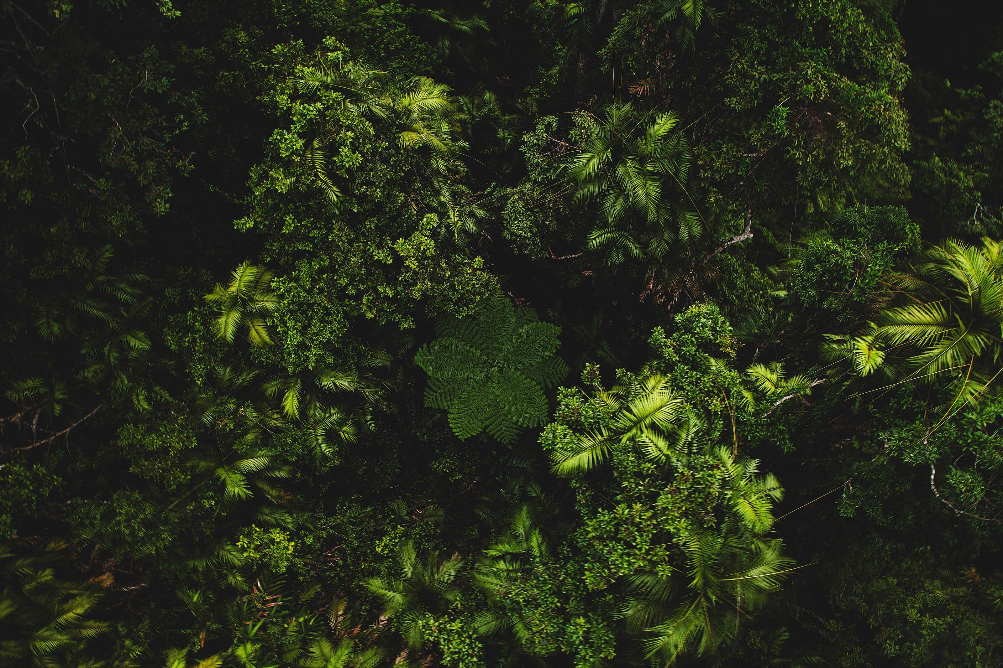 Aerial of Rainforest